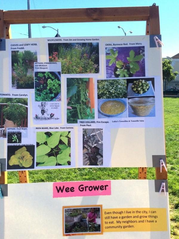 Garden photos from volunteers and neighbors