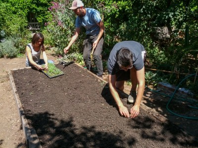 All in Common Garden - planting beds